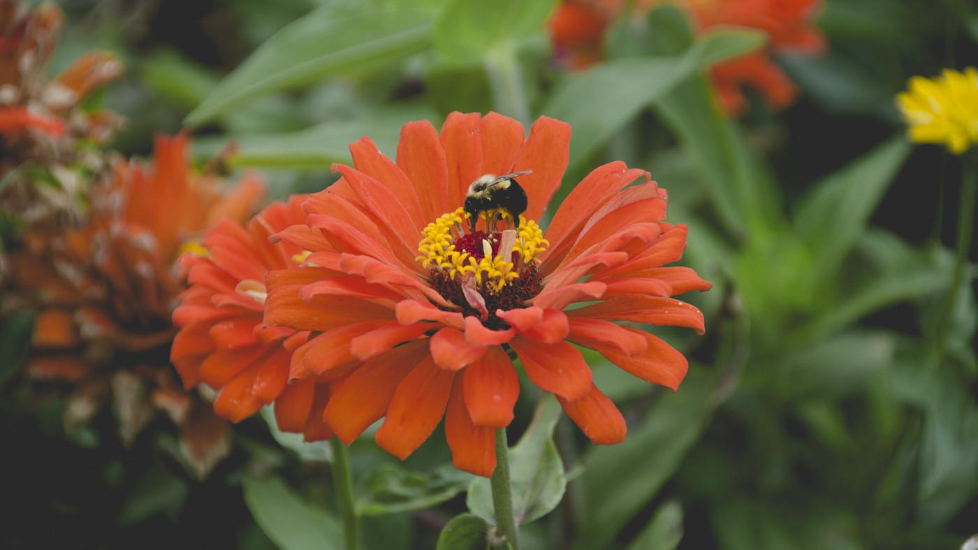 Bee-Friendly-Pesticides_Garden