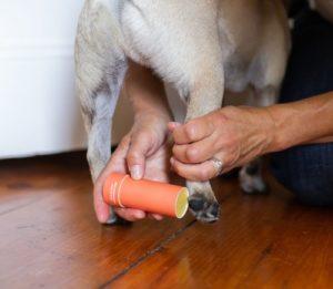 Maine Street Bee Pug with Paw Protector